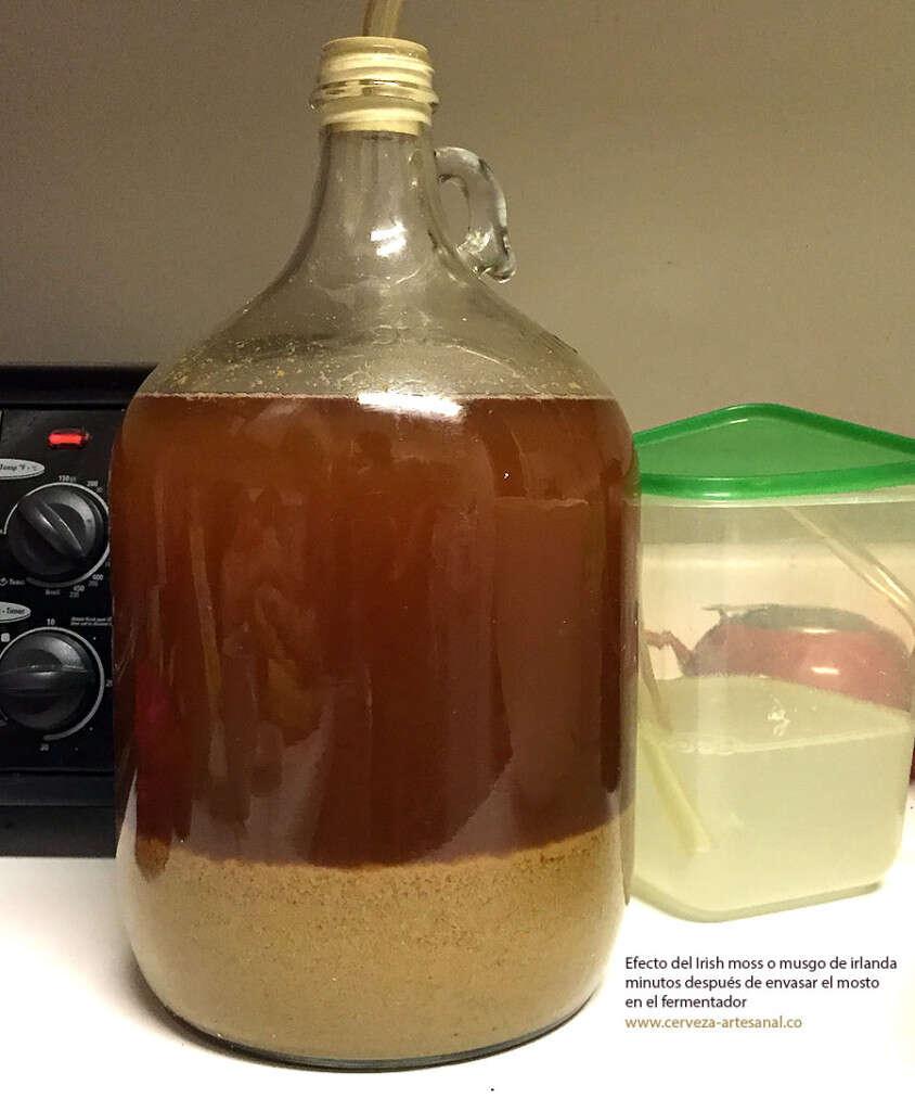 efecto-musgo-irlanda-en-fermentador