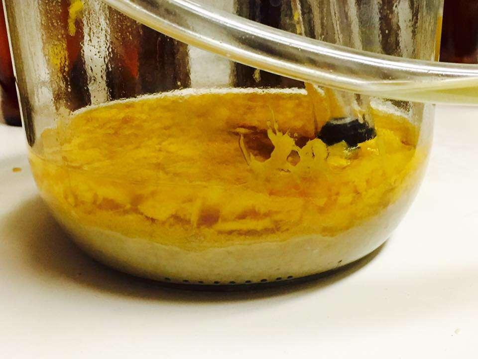mango-en-fermentador