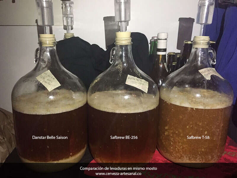 Comparación de levaduras Safbrew T-58, Safbrew BE-256 y Danstar Belle Saison en una cerveza tipo Saison